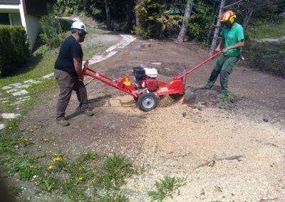 abattage d'arbre par Montagne verte à Montgenèvre