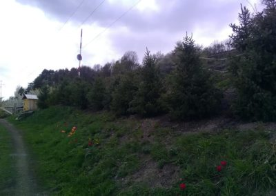 Création massif arbustif vers Briançon
