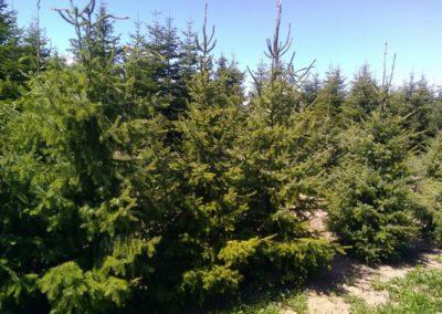 Plantation d'arbre-élagage à Briançon
