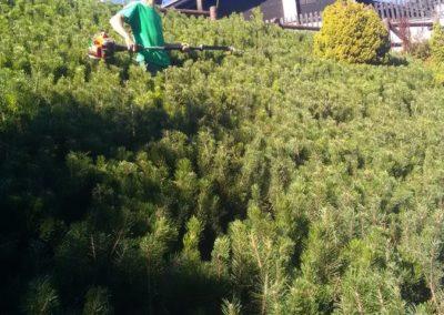 Elagage vers Briançon par Montagne verte