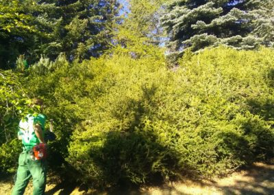 Entretien jardins par Montagne verte à Embrun